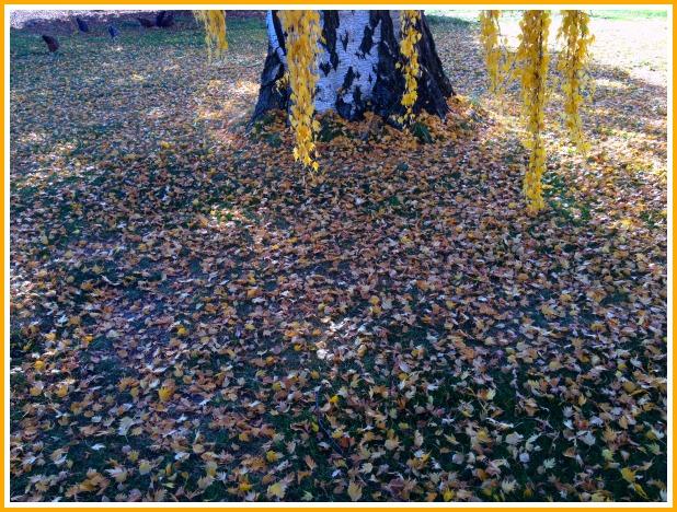 leaves.picm