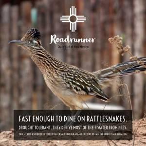 Roadrunner facts
