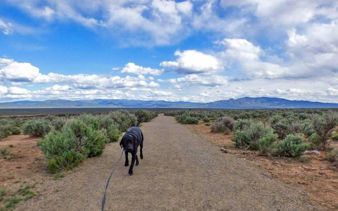 Walking the West Rim Trail by the Rio Grande gorge
