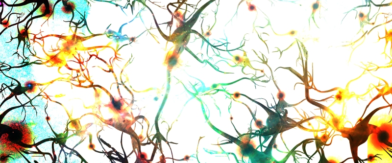 Dendrites Firing Neurons