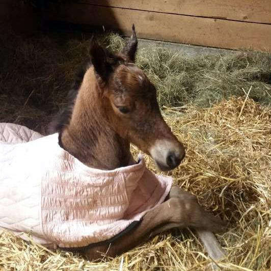 2017 Filly by Treble's Master Player
