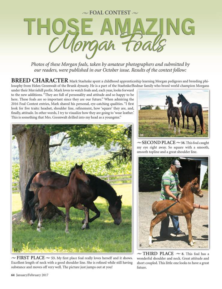 2016 Foal Contest Article