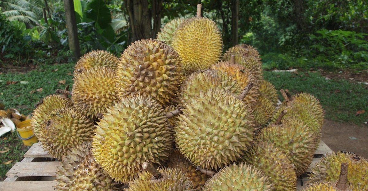 Durian - New Naratif
