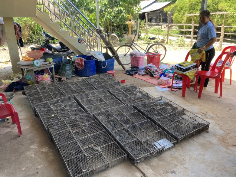 Takeo province rat brokers store their daily procurement of rats in their front yard, before it is sent across the border to Vietnam.