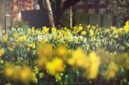 Newnham's gardens in flower