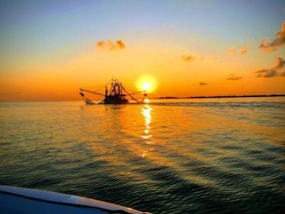 New Orleans Swamp Tours Bayou Sunset Trawl Boat