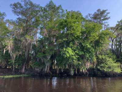 Cypress Swamp Tour New Orleans