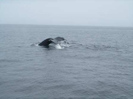 Whale spotting
