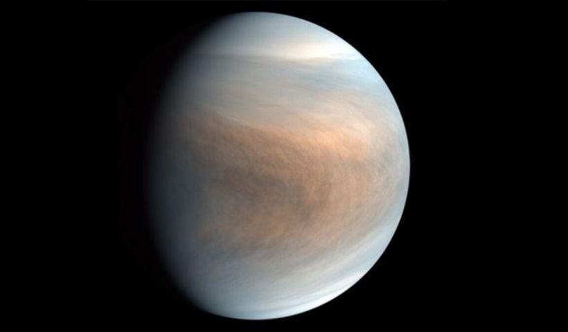 Venus vida