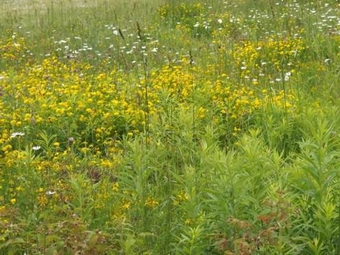 Wildflowers. Lots of wildflowers.