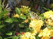 Inside Smithsonian Butterfly Garden02