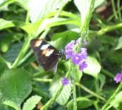 Inside Smithsonian Butterfly Garden03