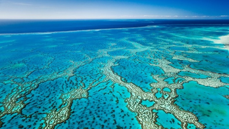 Great Barrier Reef Foundation corruption
