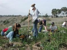 Community-based Restoration at Newport Bay