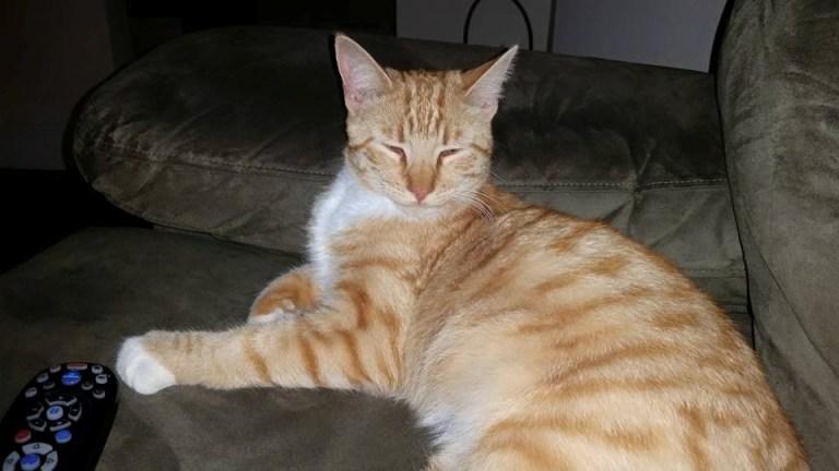 Missing Cat Newport