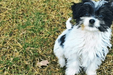 Brady Dog Fluffy