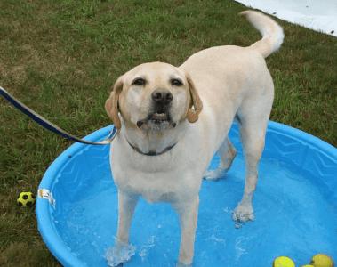 zoey_missing_dog
