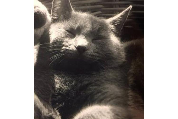 missing-cat-newport-ri
