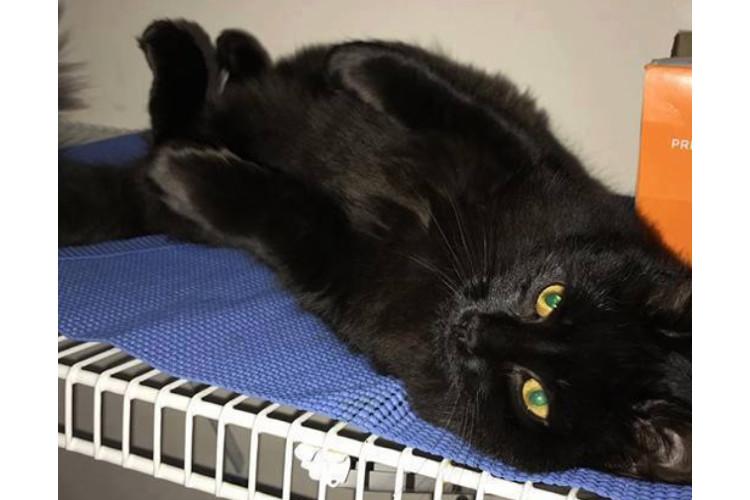 piff cat newport ri