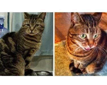 missing cat newport ri