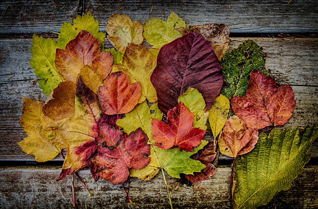 Autumn Leaf Arrangement