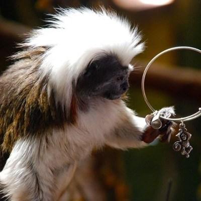 Brass Monkey, That Stylin' Monkey