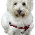 Dog Rescue Centre in Newquay