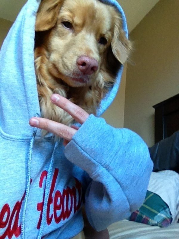 0ba485a2ff3db67ce623a6acf199c701-dog-takes-a-casual-selfie-shot