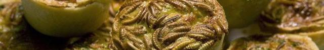 feira insetos