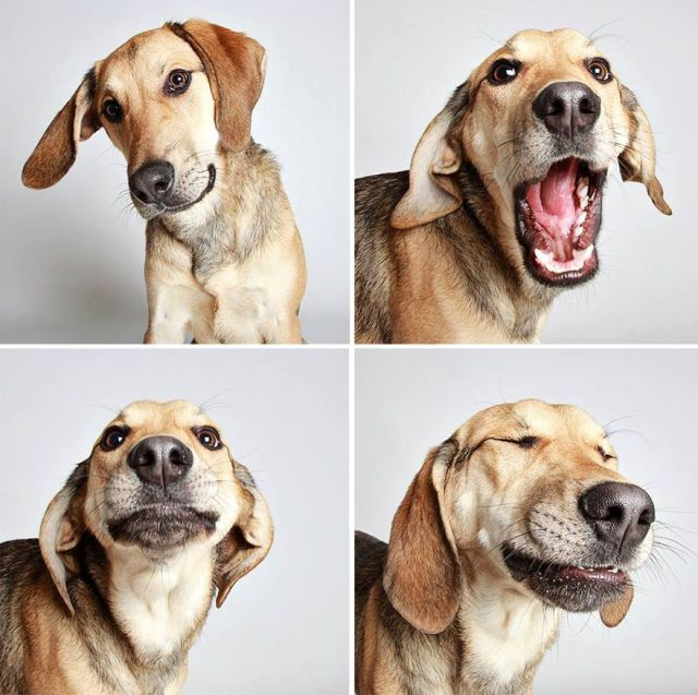 adopted-dog-photobooth-guinnevere-shuster-humane-society-utah-15