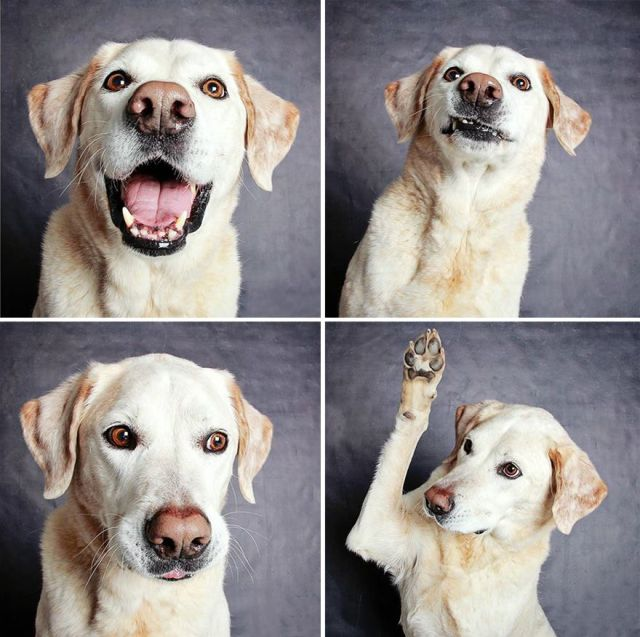 adopted-dog-photobooth-guinnevere-shuster-humane-society-utah-25