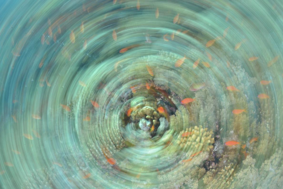 Liquid Dreams, Adolfo Maciocco – Fotografia – Stampa su Alluminio