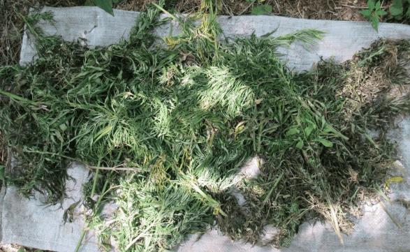 В Степновском районе выявлен факт незаконного хранения наркотических средств
