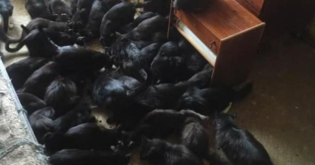 Пенсионеры поселили в своей квартире более 60 кошек в Москве