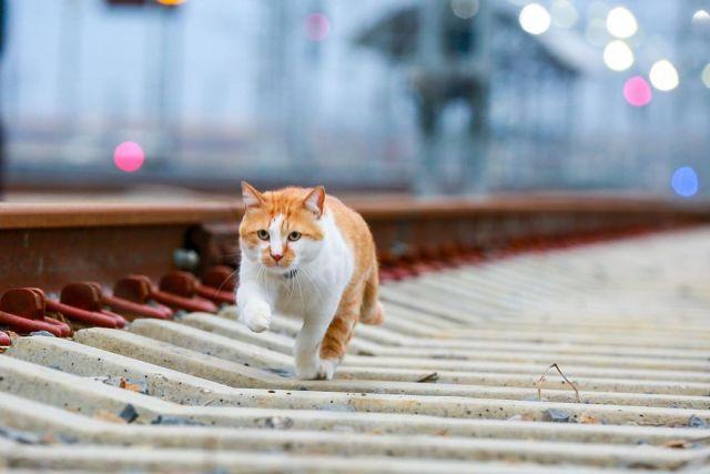 Кот «Мостик» прошелся по шпалам «Крымского моста»