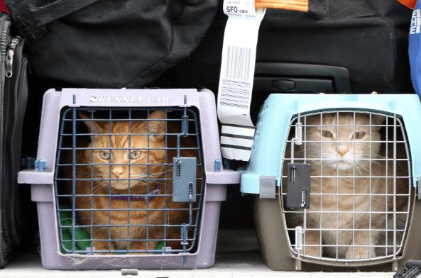 Каких животных можно перевозить в самолёте?