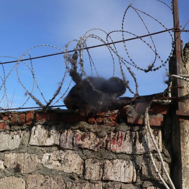 Запутавшегося в колючей проволоке раненого кота спасли на Кубани
