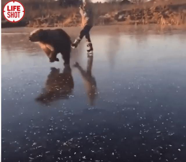 Медведь вместе с хозяйкой катается на коньках на озере в Ярославской области