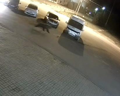 Дикий медведь ночью напал на парня на улице Ярославля
