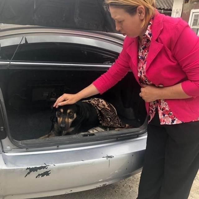 Живодеры привязали собаку к машине и волочили ее по дороге на Ставрополье