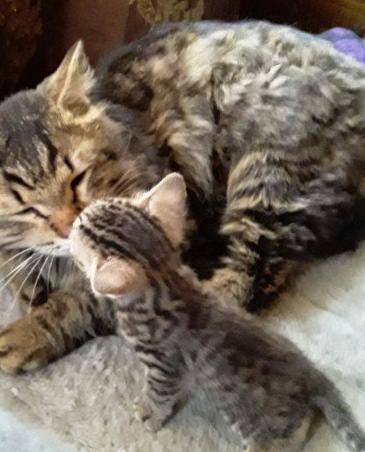 В Москве похитители требуют выкуп за кота