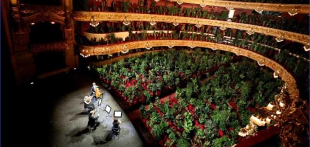 В Барселоне устроили концерт для 2292 комнатных растений