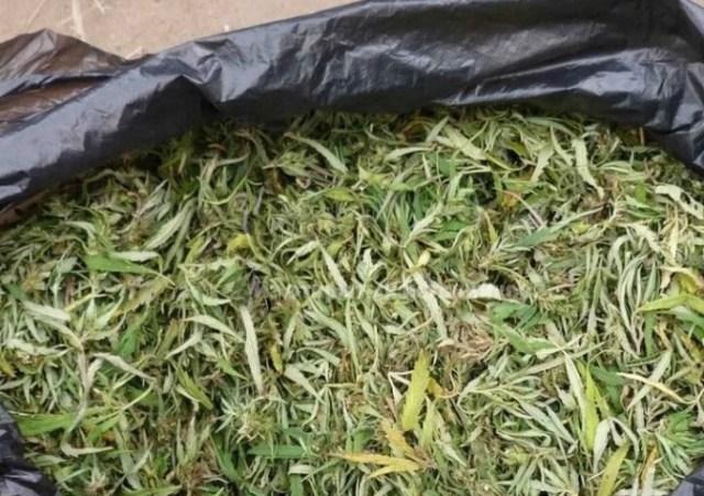 В Кочубеевском районе правоохранители изъяли мешок конопли у местного жителя