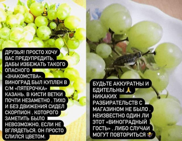 Прятавшийся в грозди винограда скорпион укусил женщину в Казани