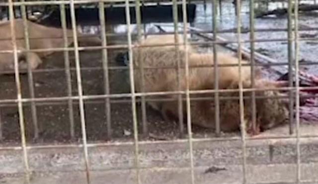 Суд над хозяином медведя, растерзавшего школьника, пройдет в Сочи