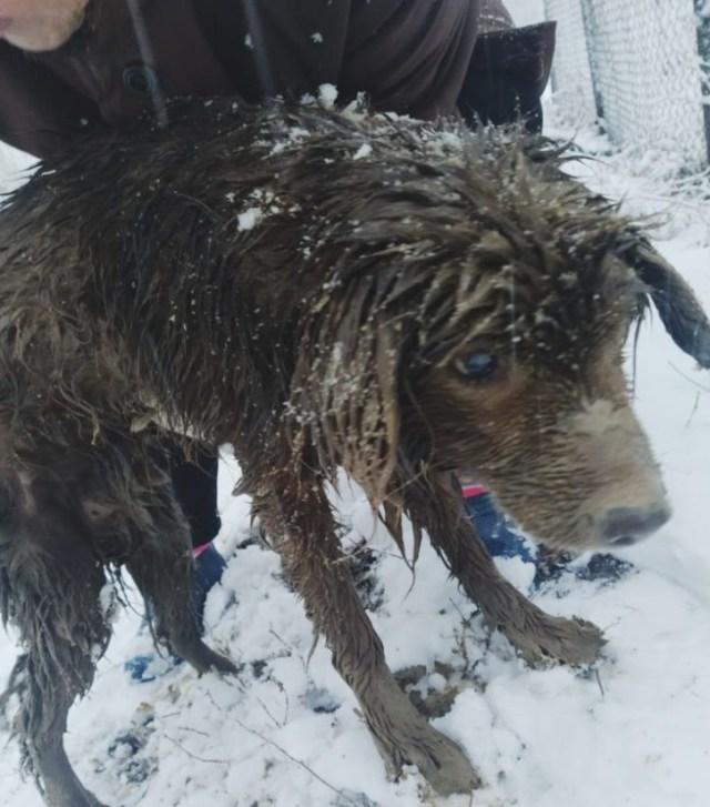 Тонущего пса спасли на Ставрополье