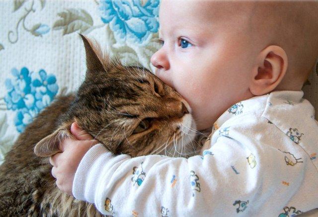 Кот спас от голодной смерти ребенка в Москве