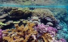 coral reef_USFWS_flickr_f