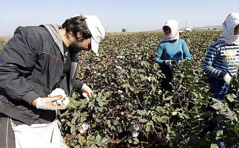 Сирийские беженцы: дешевая и нелегальная рабочая сила