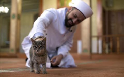Стамбульский имам — друг кошек